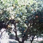 Лимонче или портокалче в края на месец март