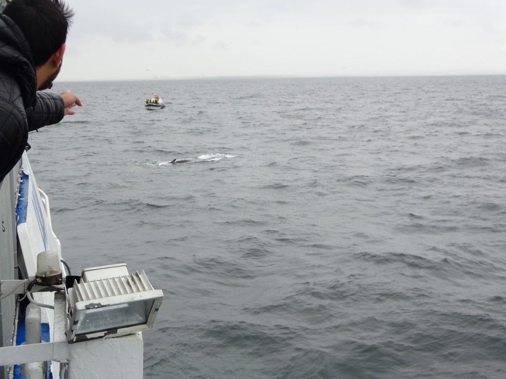 На лов за китове