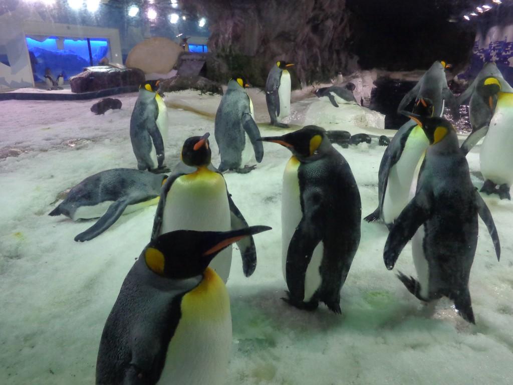 Окланд, в аквариума на Кели Тарлтън