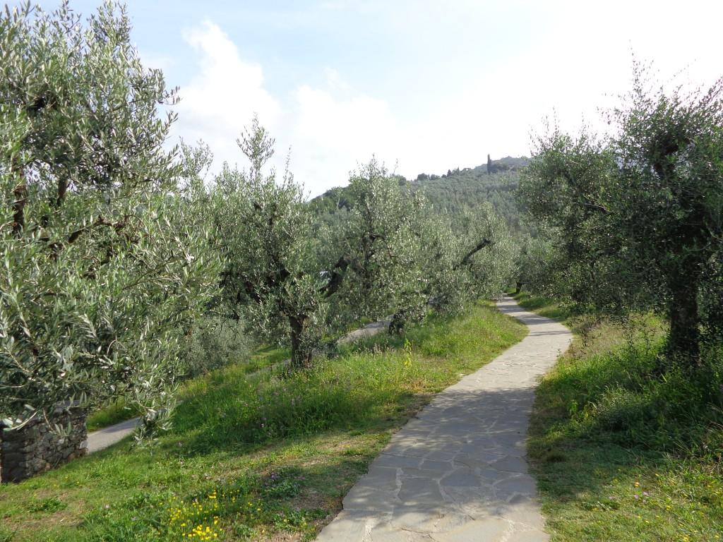Към родната къша на Леонардо да Винчи води път през красива маслинова горичка