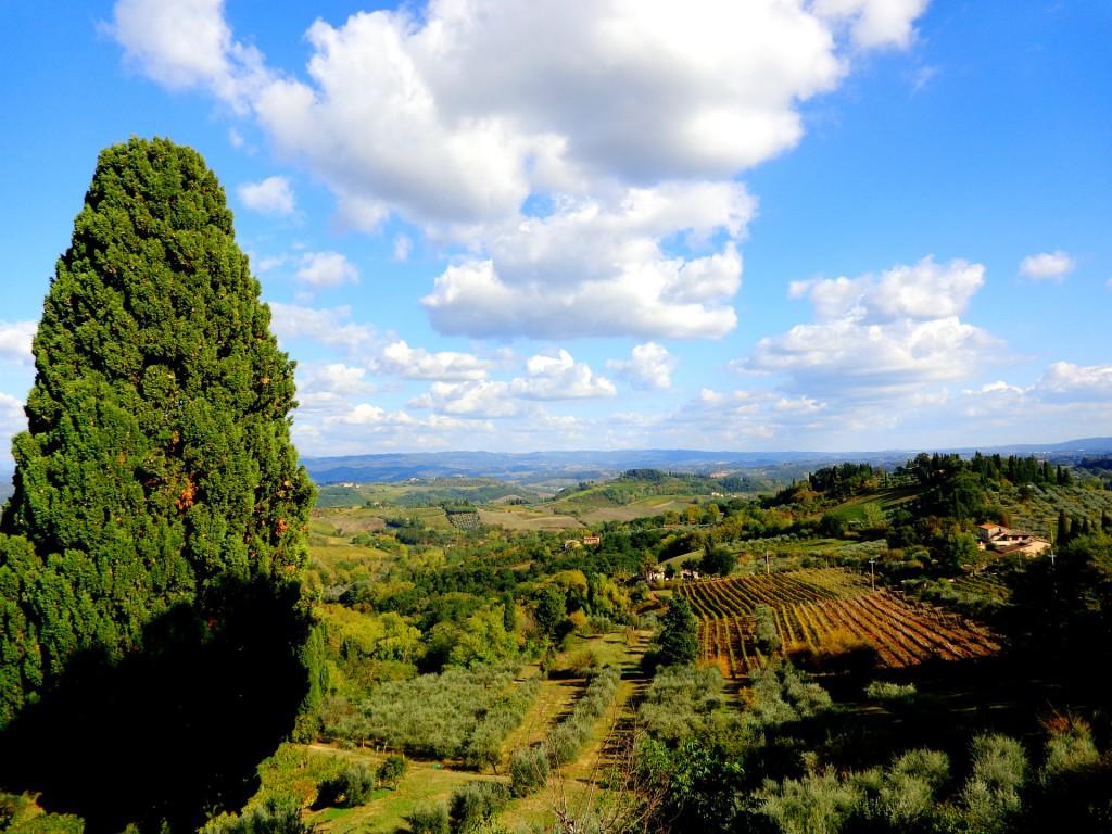 """Лозовите масиви, даващи прочутото бяло вино """"Вернача от Сан Джиминяно"""""""
