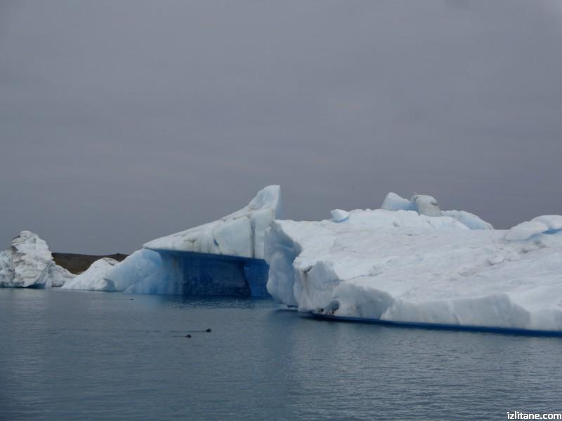 Ледената лагуна Йокулсарлон - 4, сиви тюлени