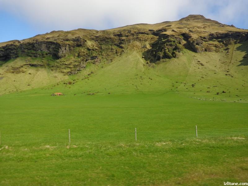 Исландско зелено - 2