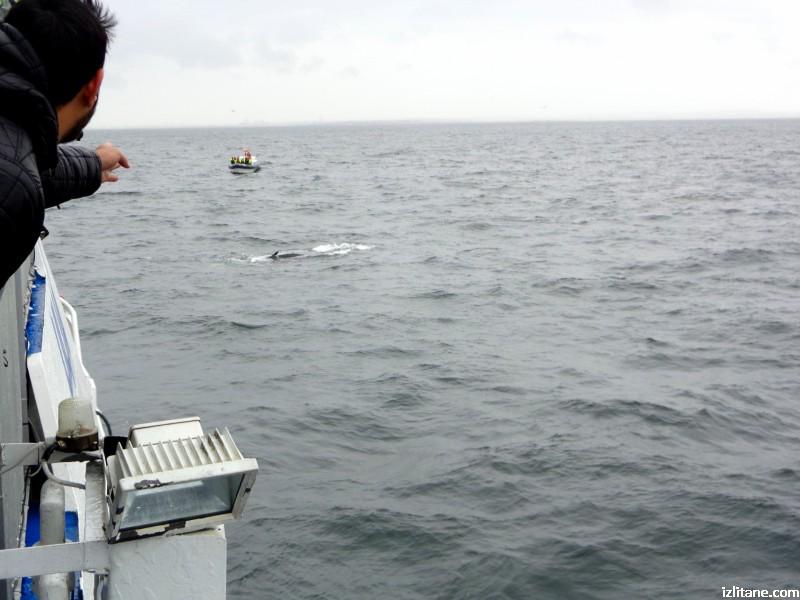 Наблюдение на китове край Рейкявик